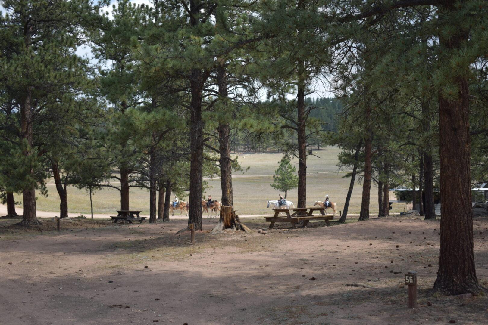 Primitive Site 56-a